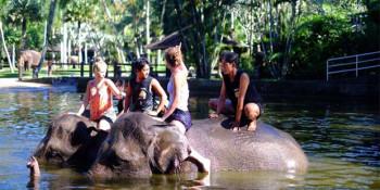 Berlibur Anti-Mainstream di Bali, Pagi-pagi Memandikan Gajah