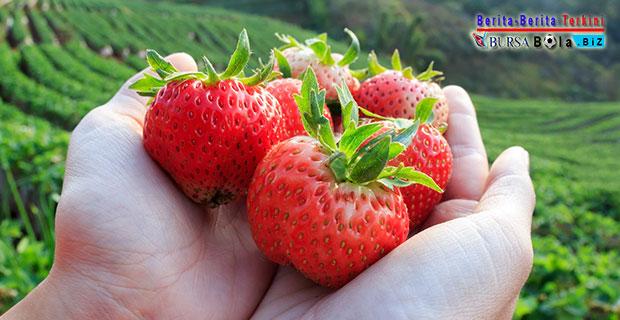 Simak 8 Jenis Buah Yang Rendah Gula dan Baik Bagi Kesehatan