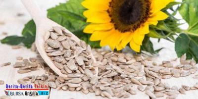 Yuk Kenali Kandungan Manfaat Nutrisi Dari Kuaci